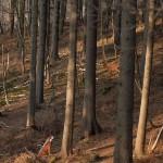 Bogenschießen Waldparcours 3D-Ziele Wolf und Hirsch
