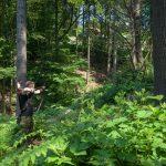 Pfeil und BogenWelt Dortmund Waldparcours, Bogenschießen Schütze mit Langbogen auf 3D-Ziel Wildschwein