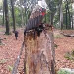Bogenschießen 3D-Ziel Geier Herbstturnier
