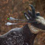 Pfeil und BogenWelt Dortmund Waldparcours, Bogenschießen 3D-Ziel Gams