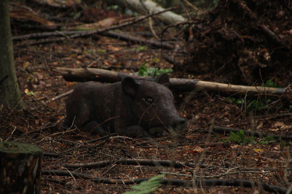 Bogenschießen Herbstturnier 3D-Ziel Wildschwein