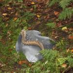 Bogenschießen Herbstturnier 3D-Ziel Schlange