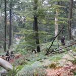 Bogenschießen Herbstturnier