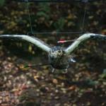 Bogenschießen Herbstturnier 3D-Ziel Eule