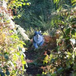 Bogenschießen Herbstturnier 3D-Ziel Wolf