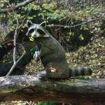 Bogenschießen Herbstturnier 3D-Ziel Waschbär