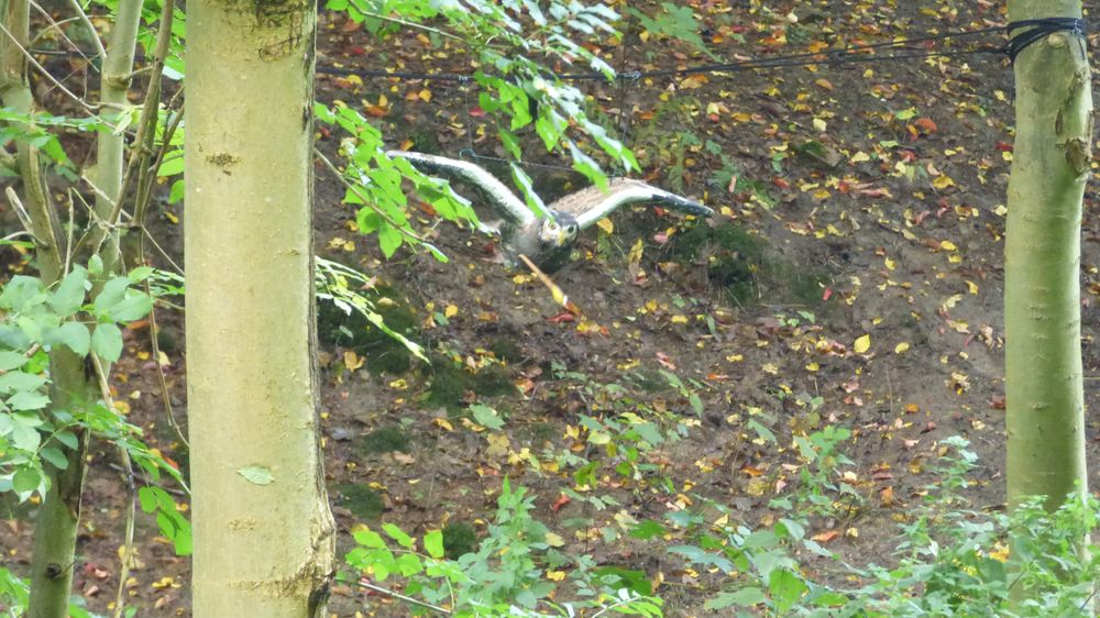 Bogenschießen 3D-Ziel Eule Herbstturnier